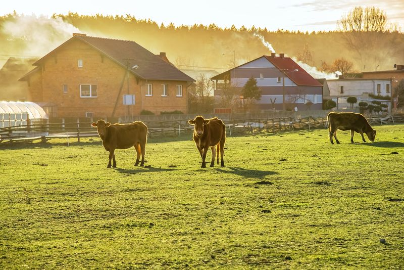 Farms for Sale – What You Need to Know Before You Buy a Farm