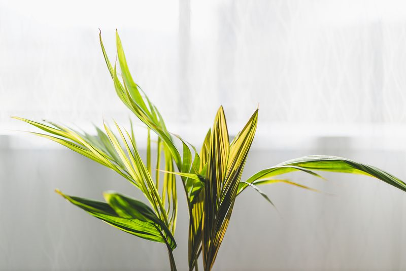 5 Easy to care-for indoor trees